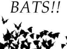 恐怖的蝙蝠群笔刷