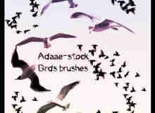 海鸥鸟类笔刷