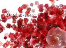 鲜红玫瑰花朵笔刷
