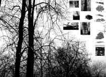 树皮树木效果笔刷