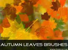 秋天的枫叶笔刷