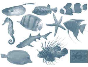 Photoshop奇特海洋生物笔刷