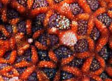 10张漂亮的海星与珊瑚的微距摄影