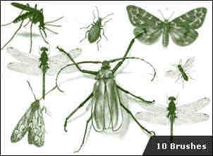 真实的蚊子蟋蟀蝴蝶昆虫笔刷