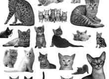 真实宠物的猫咪小猫笔刷