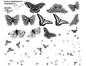 漂亮的真实黑白蝴蝶PS笔刷下载