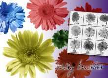 漂亮真实太阳花、向日葵花花朵PS笔刷下载