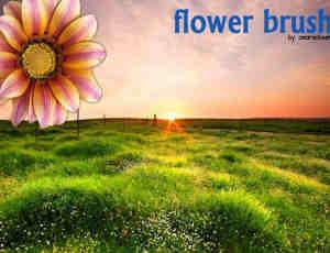 时尚漂亮的手绘鲜花花朵PS笔刷