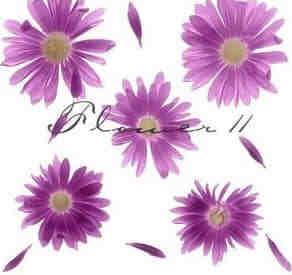 紫色太阳花PS笔刷