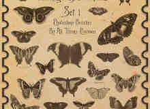 古典式蝴蝶PS笔刷下载