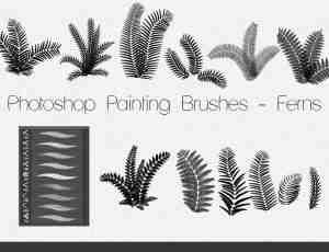 Photoshop蕨类植物素材笔刷下载