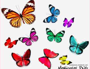 漂亮的七彩蝴蝶照片美化素材-【美图秀秀素材】