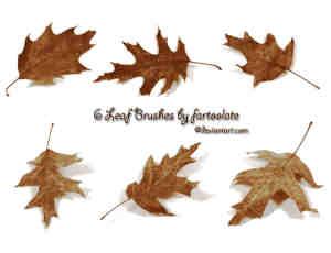 CG效果梦幻枫叶、树叶、枯叶PS素材笔刷