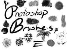 Photoshop叶子、绒毛、花朵等笔刷素材下载