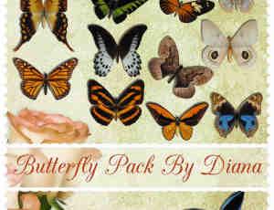 19只漂亮的斑斓蝴蝶照片美化装饰素材-【美图秀秀素材】