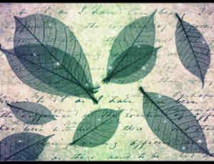 梦幻的绿叶纹理、半透明树叶photoshop笔刷素材下载