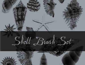 贝壳、海螺、海星等海洋生物photoshop笔刷素材