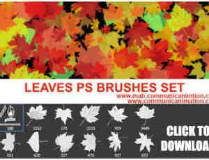 秋天的枫叶、梧桐叶photoshop笔刷素材