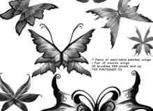 美丽的艺术蝴蝶photoshop笔刷素材