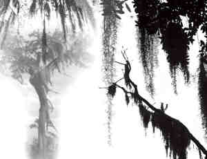 雾凇、松叶背景素材photoshop笔刷