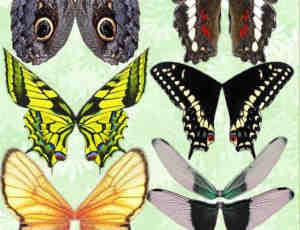 漂亮的七彩蝴蝶翅膀美图秀秀、可牛影像素材下载