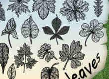 17种树叶标本图案photoshop笔刷素材