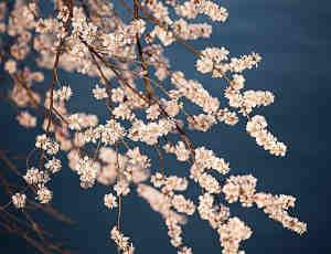 七招巧拍树上花,一年又一年,春暖花又开!