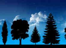 植物树木剪影素材photoshop笔刷 #.2