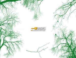 枯凋的树枝、枝条、树木photoshop笔刷素材下载