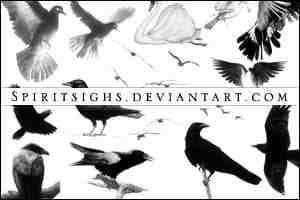 鸽子、乌鸦等鸟类图案photoshop笔刷