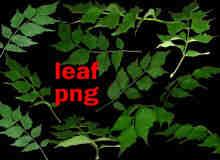 蕨类植物叶子、树叶Photoshop笔刷素材