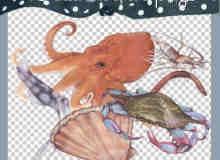 已扣!乌贼、扇贝、梭子蟹、虾等海鲜海洋生物【美图秀秀素材】