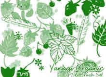 树叶、草莓、羽毛图形Photoshop笔刷