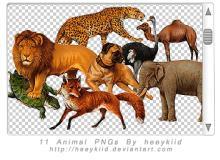 动物狮子、豹子、狐狸、狗、乌龟等图像【美图秀秀素材包】