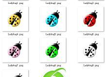 已扣图!七彩瓢虫、甲虫PNG透明图片美图素材