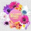 9多漂亮的鲜花png透明图片素材
