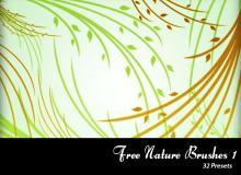 漂亮的树枝、柳条植物花纹PS美图笔刷