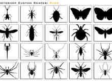 自定义形状昆虫PS填充笔刷
