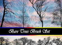 树木、树干剪影Photoshop笔刷素材