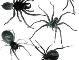 真实恐怖毒蜘蛛Photoshop笔刷素材