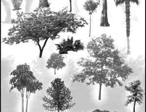 30种热带雨林树木、树林PS笔刷下载
