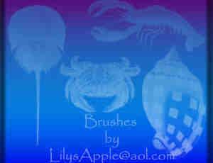 26种贝壳、海螺图形Photoshop笔刷