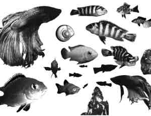 海洋鱼类Photoshop笔刷
