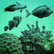 海洋鱼和珊瑚Photoshop笔刷
