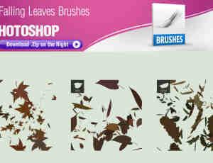 3种树叶、枫叶、落叶PS笔刷素材下载
