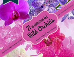 21种漂亮的兰花真实花朵Photoshop鲜花笔刷
