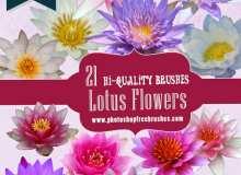 21种高分辨率莲花、雪莲、睡莲Photoshop鲜花花朵笔刷