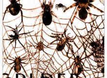 恐怖蜘蛛PS笔刷素材下载