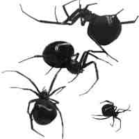 黑寡妇蜘蛛PS笔刷下载