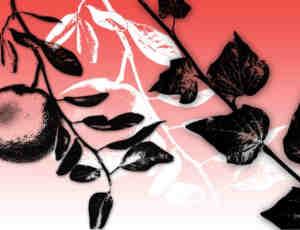 植物树枝版刻图案Photoshop笔刷下载
